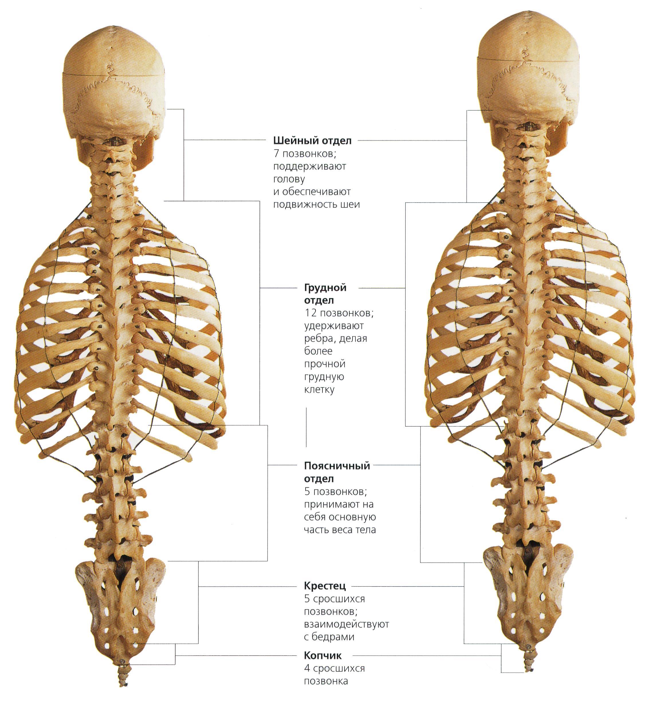 Лечение спинального стеноза